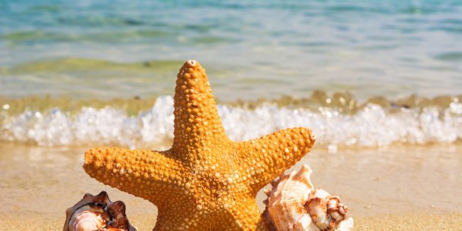 Starfish Story and the courage to continue